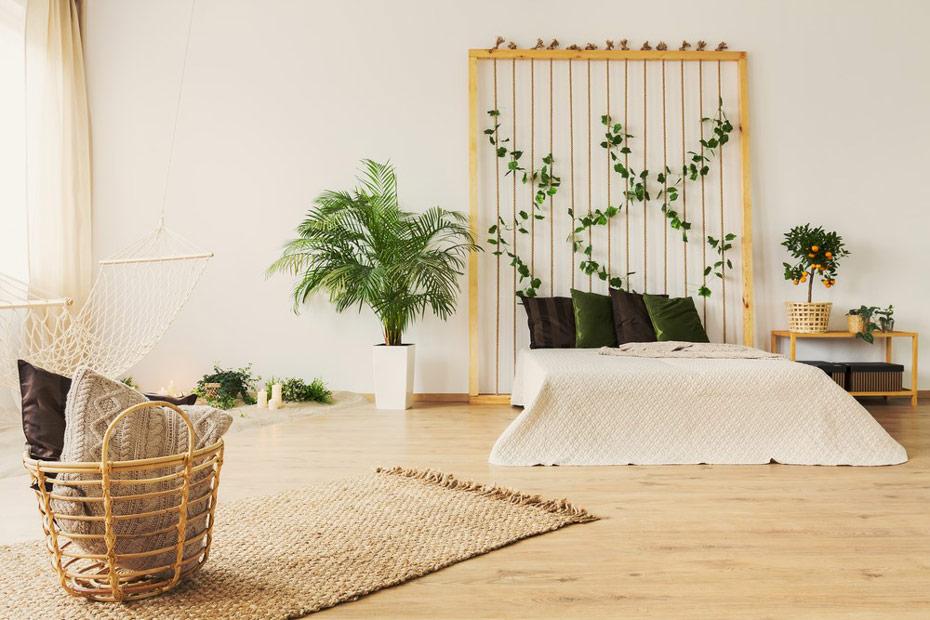 Jakie Rosliny Do Sypialni Wybrac Kwiaty Doniczkowe Dla Dobrego Snu