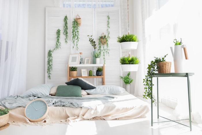 Jakie rośliny dosypialni wybrać – kwiaty doniczkowe dladobrego snu