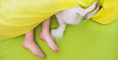 Spanie z psem w jednym łóżku – spod wystają dziecięce stopy i tylne łapy psa - zdrowy-sen.eu